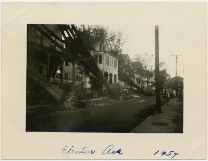 Row of fallen trees, Clinton Avenue, 1954.